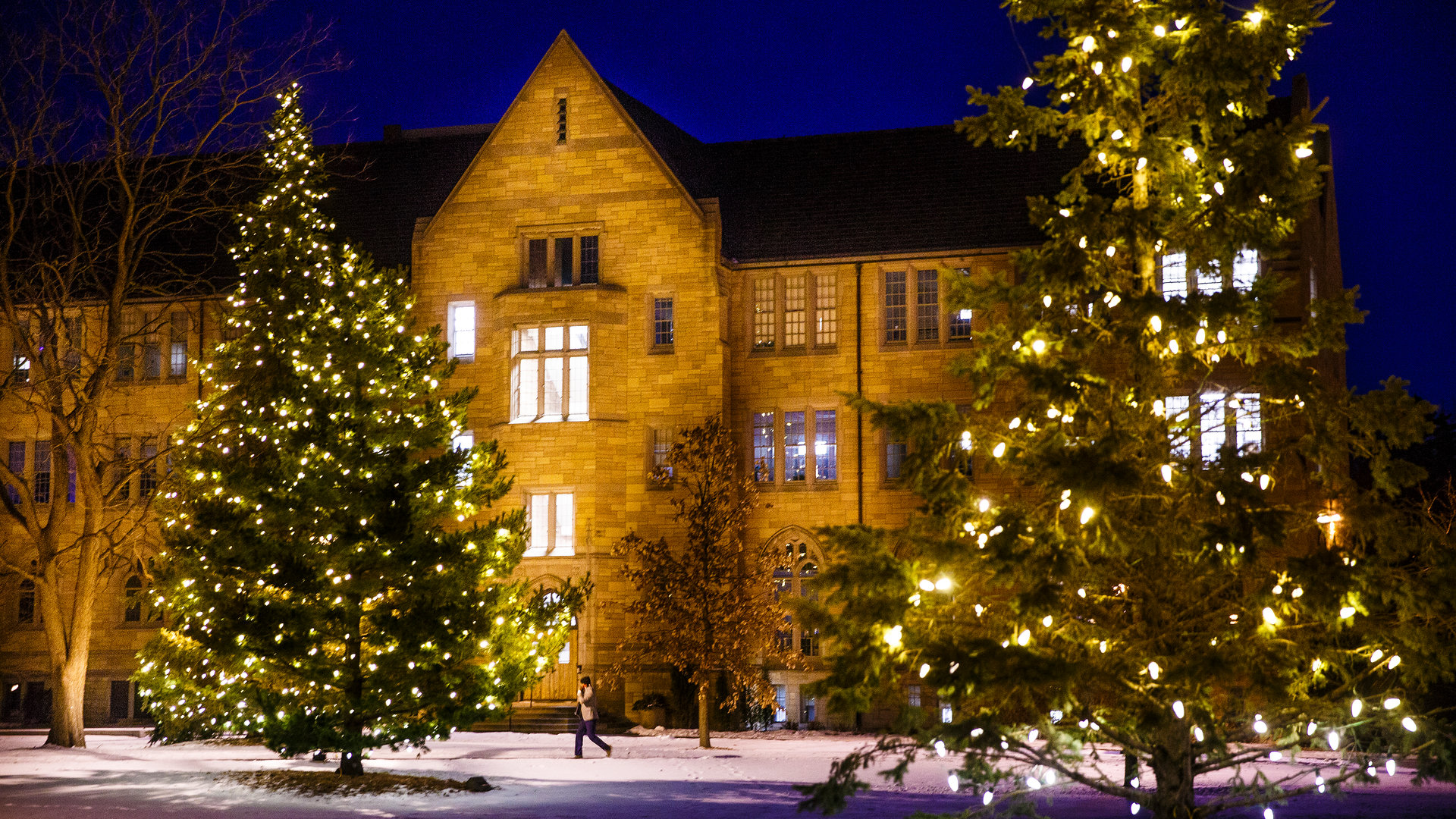 trees in the lower quad are lit up for the Christmas season